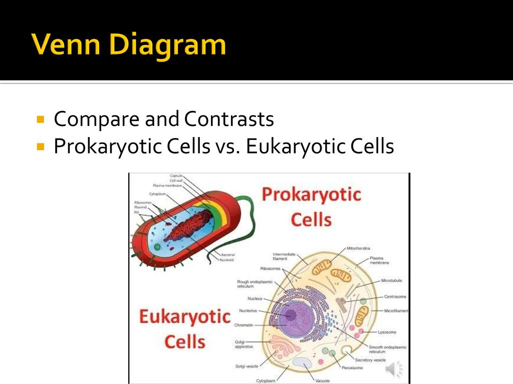 Chapter 7 unit 1 cells ppt download 50 venn diagram compare and contrasts prokaryotic cells vs eukaryotic cells pooptronica Image collections