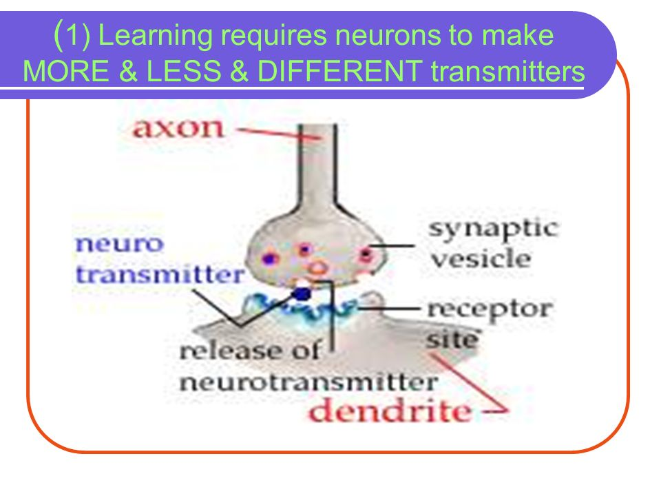 (1) Learning requires neurons to make MORE & LESS & DIFFERENT transmitters
