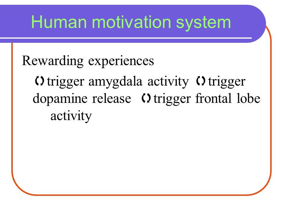 Human motivation system