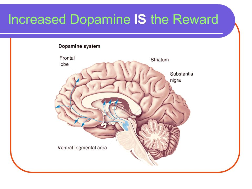 Increased Dopamine IS the Reward