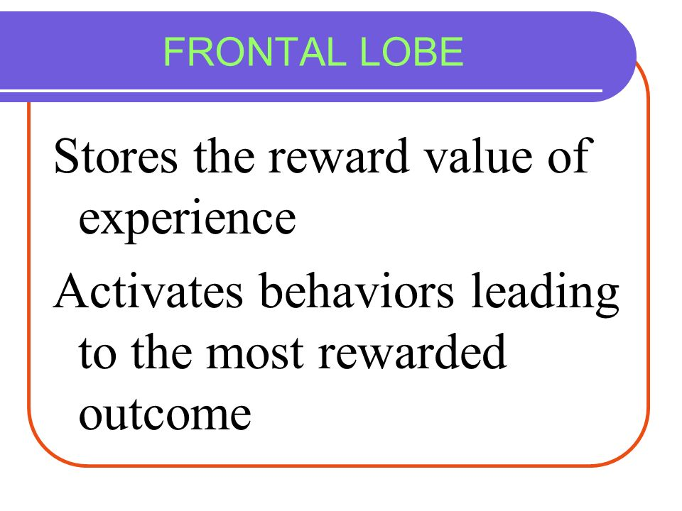 Stores the reward value of experience