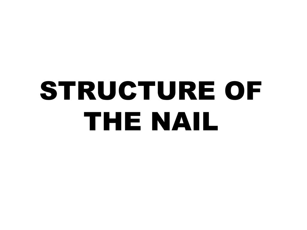 NAIL CARE. - ppt download