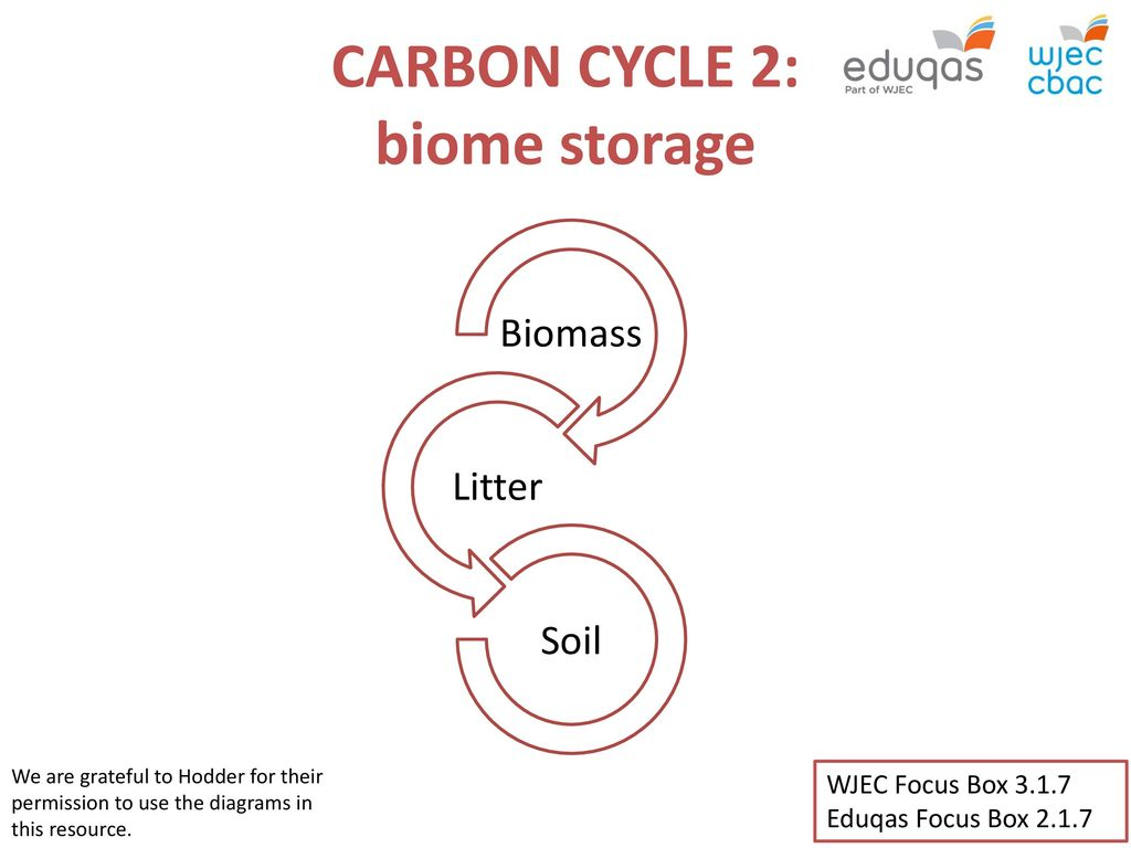 Carbon cycle 2 biome storage ppt download carbon cycle 2 biome storage ccuart Choice Image