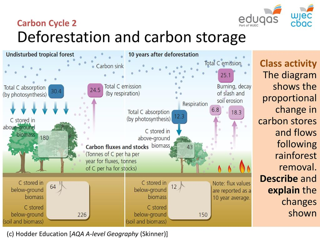 Carbon cycle 2 biome storage ppt download 10 carbon ccuart Choice Image