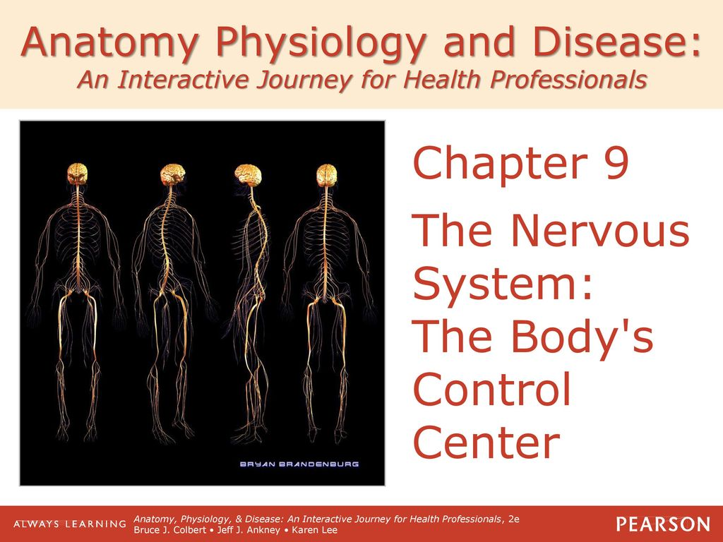 Beste Anatomy And Physiology Chapter 9 Nervous System Bilder ...