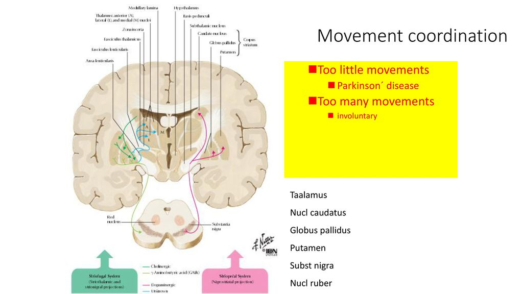 Anatomy and physiology of nervous system - ppt download