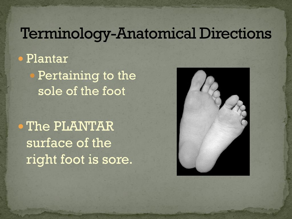 Terminology-Anatomical Directions