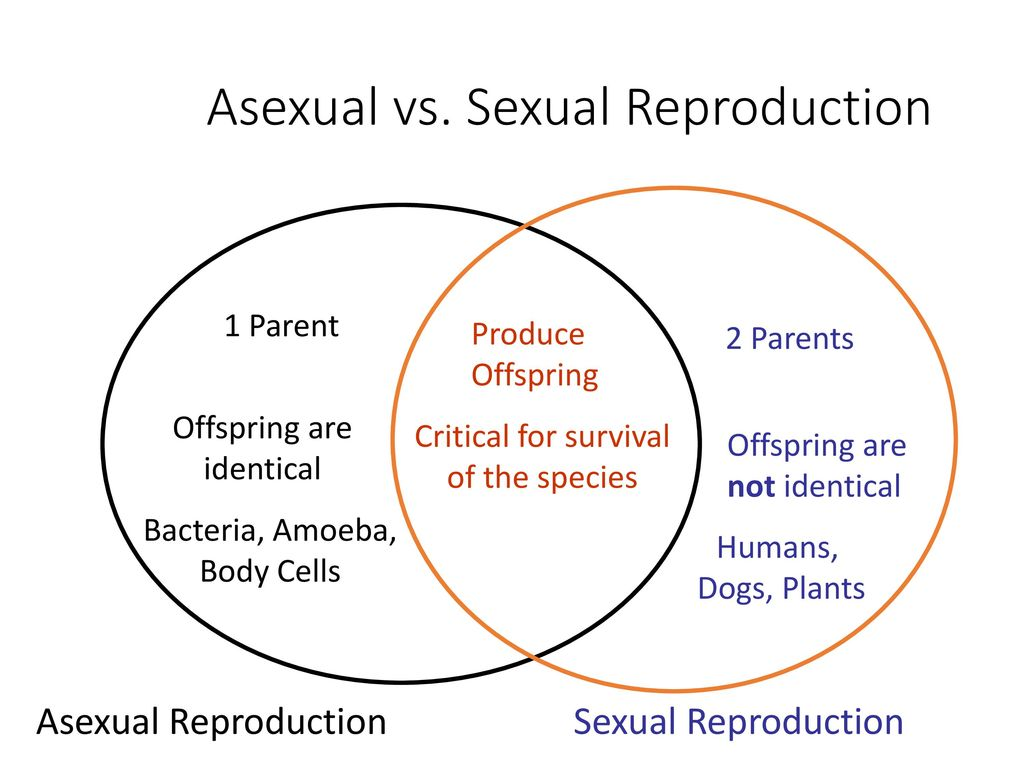 Self fertilization vs asexual reproduction in plants
