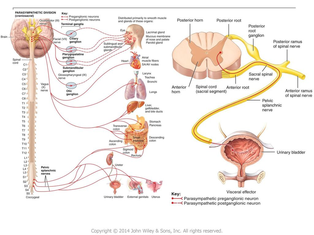 Increíble Wiley Principles Of Anatomy And Physiology Molde ...
