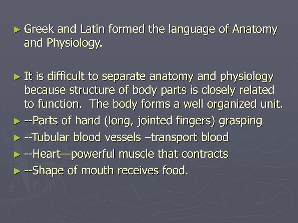 Exelent Language Of Anatomy And Physiology Model - Physiology Of ...