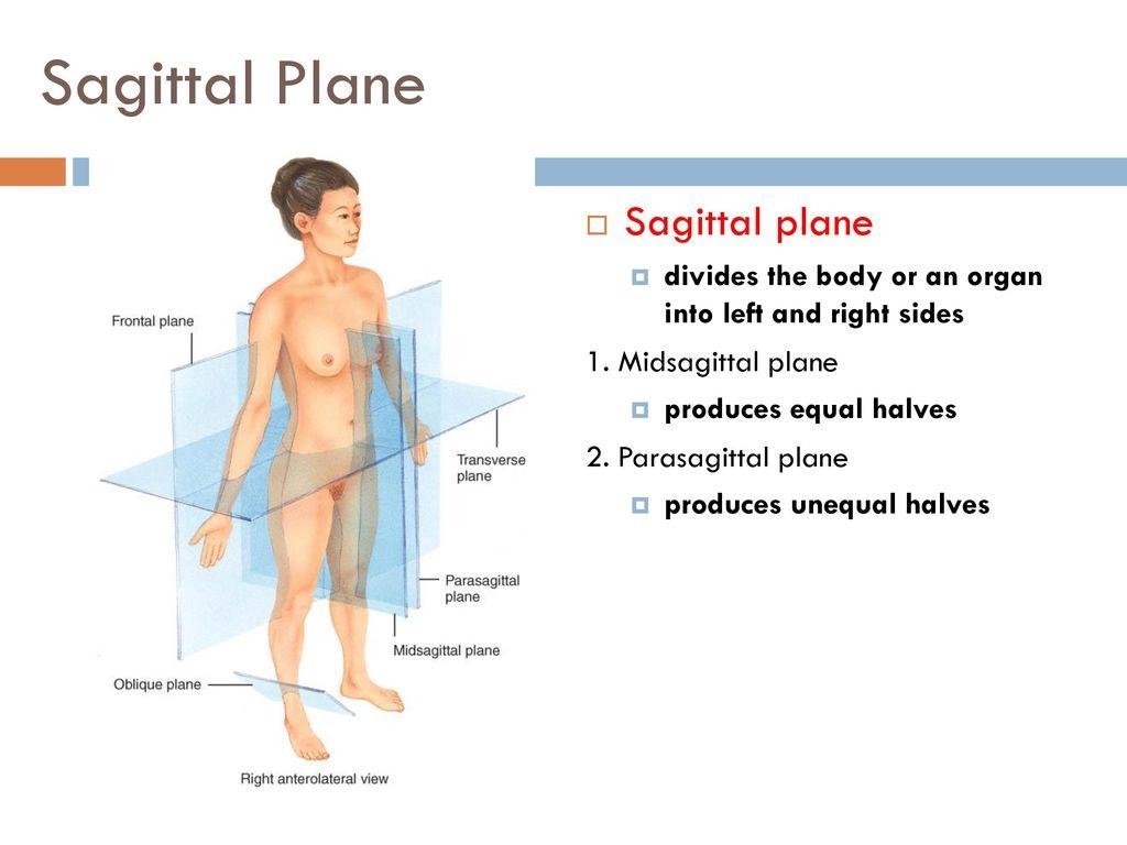 Old Fashioned Midsagittal Plane Anatomy Ensign - Human Anatomy ...