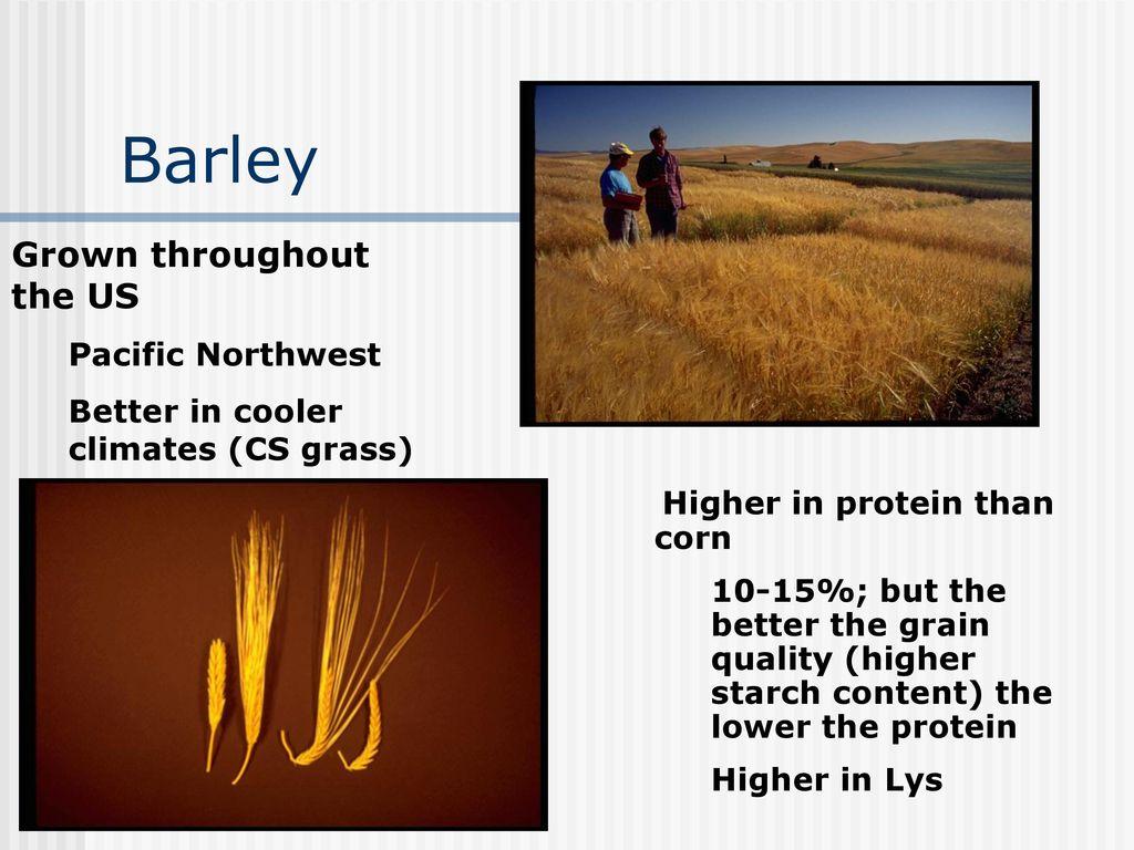 barley cysteine application