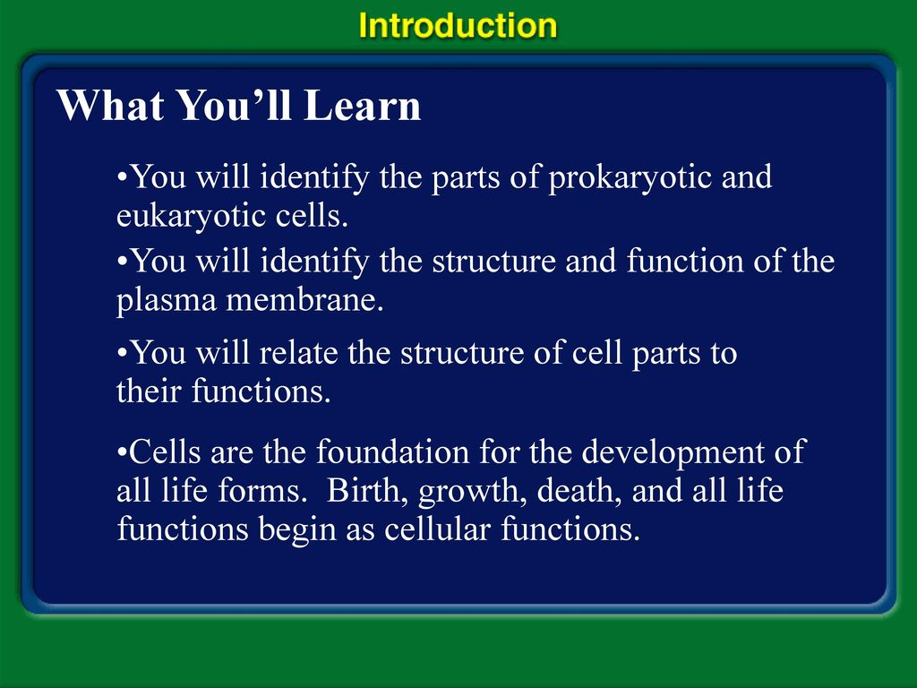 worksheet A View Of The Cell Worksheet Answers a view of the cell discovery microscopes theory what youll learn you will identify parts prokaryotic and eukaryotic cells