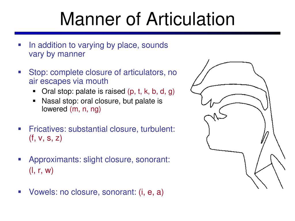 Fantastisch Anatomy And Physiology Articulations Bilder ...