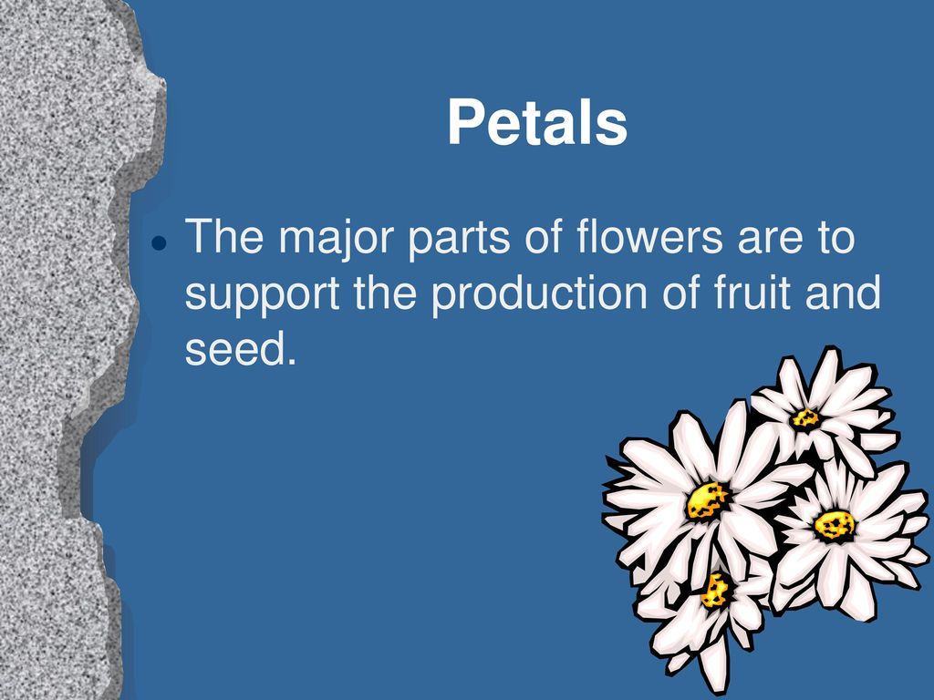 Examining flowers and fruits ppt download 12 petals the major parts of flowers are to support the production of fruit and seed izmirmasajfo Gallery