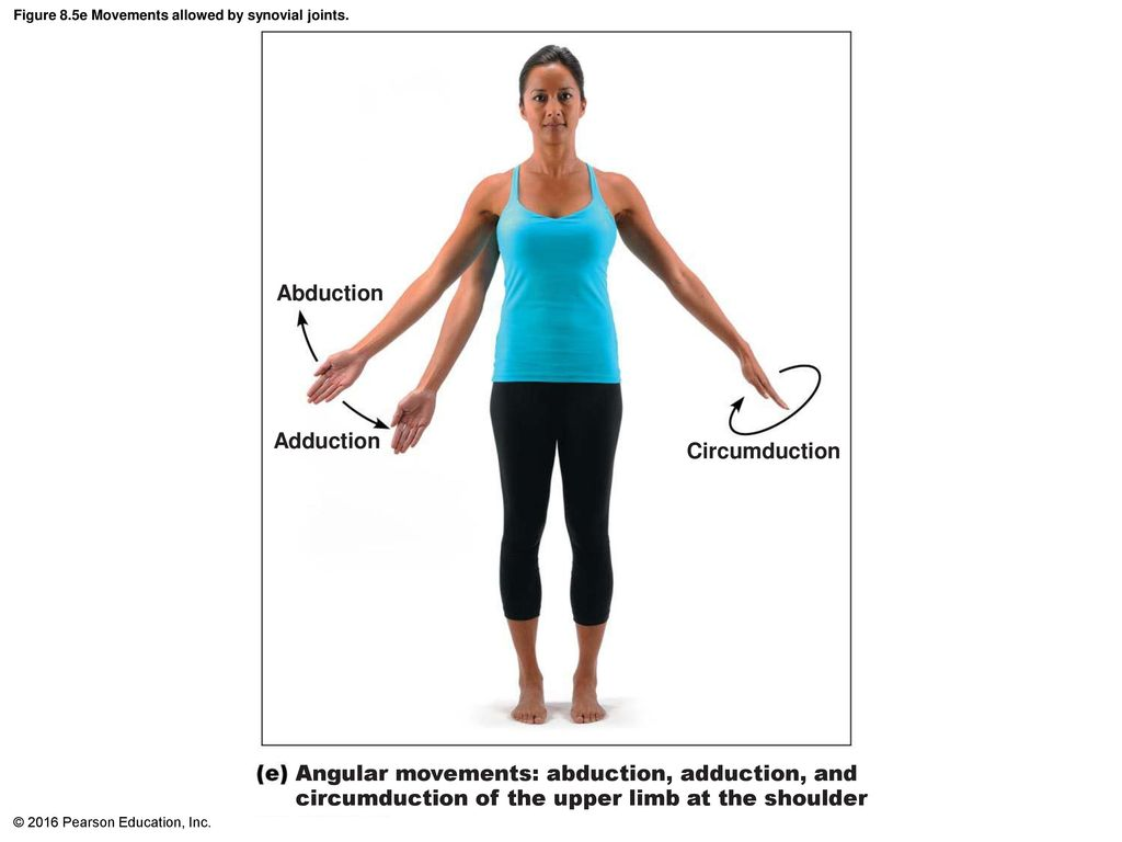 Attractive Definition Of Adduction In Anatomy Images Anatomy Ideas