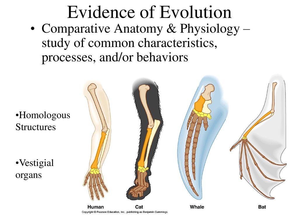 Ausgezeichnet Evidence Of Evolution Comparative Anatomy Ideen