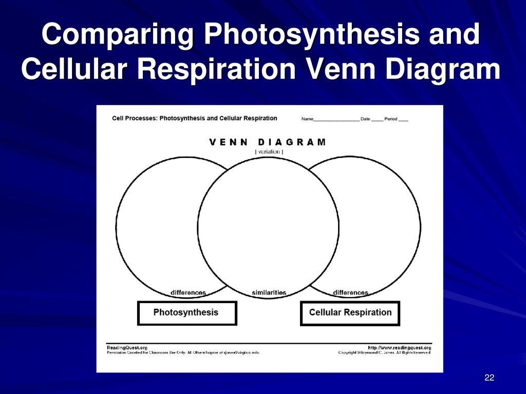 Venn diagram comparing cellular respiration and photosynthesis venn diagram comparing cellular respiration and photosynthesis venn diagram photosynthesis and cellular respiration ccuart Images
