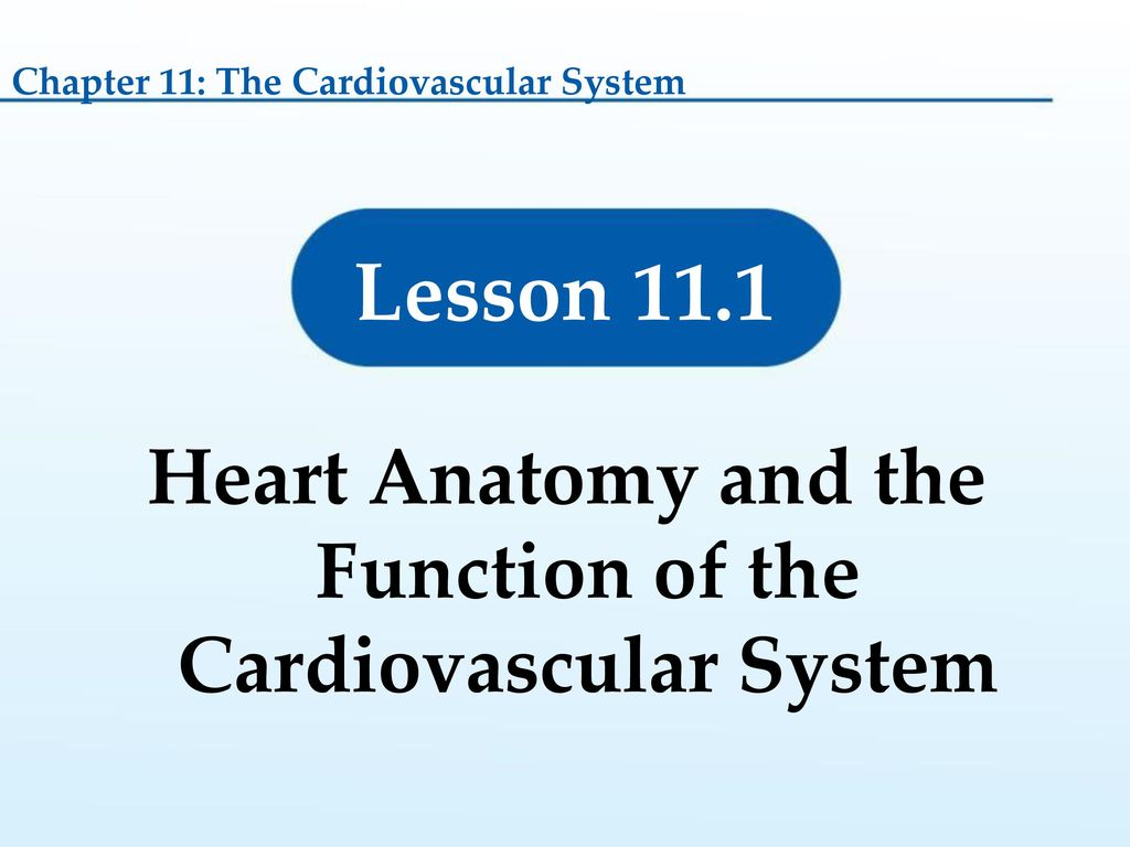 Exelent Anatomy And Physiology Chapter 11 The Cardiovascular System ...