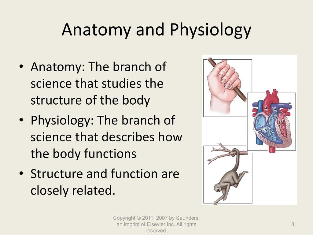 Tolle Gemeinsame Anatomie Leberarterie Zeitgenössisch - Anatomie ...