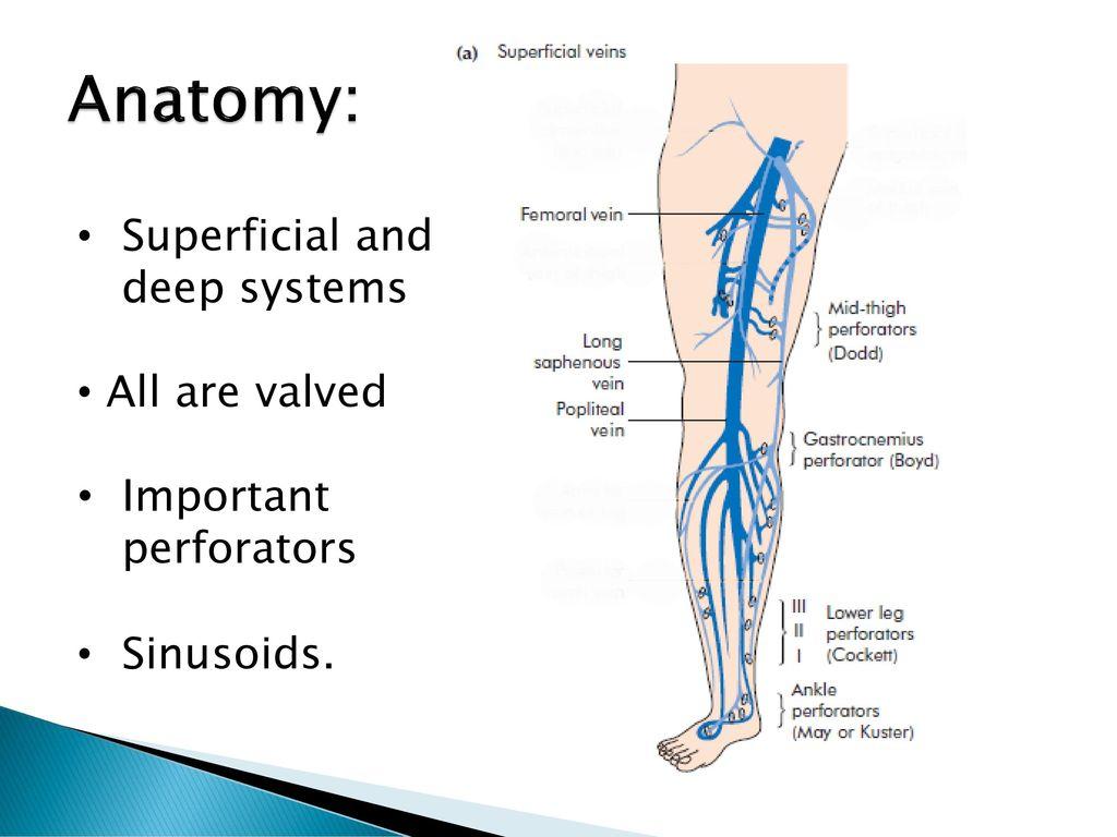 Groß Deep Veins Of The Leg Anatomy Galerie - Anatomie Ideen ...