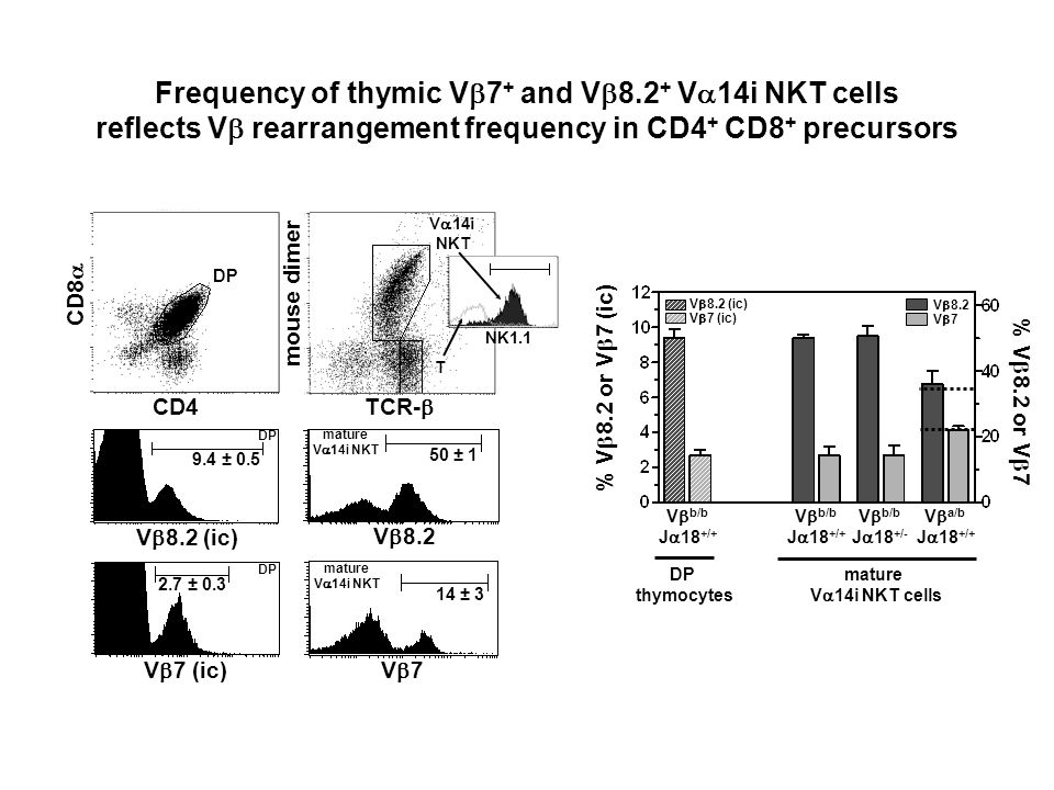 Frequency of thymic Vb7+ and Vb8