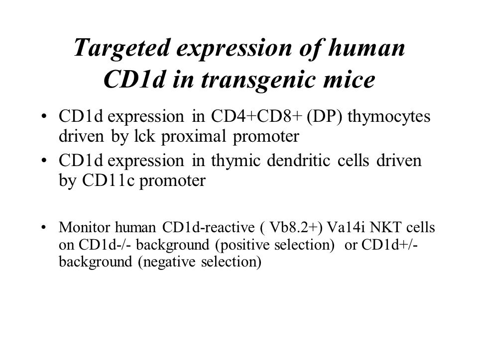 Targeted expression of human CD1d in transgenic mice