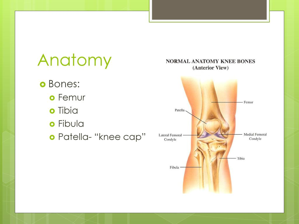 Fancy Anatomy Of Knee Cap Collection - Human Anatomy Images ...