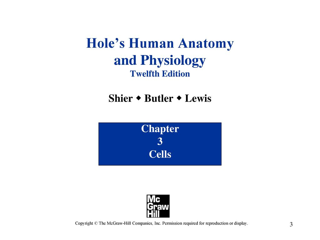 Wunderbar Mcgraw Hill Holes Anatomy And Physiology 12th Edition ...