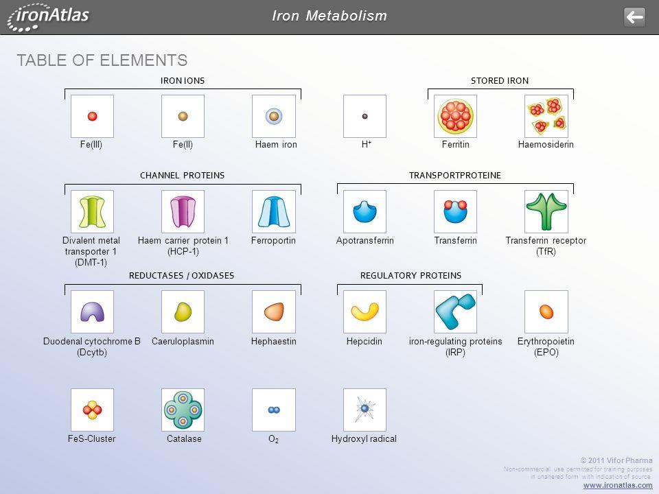Table of Elements Iron Metabolism IRON IONS STORED IRON Fe(III) Fe(II)
