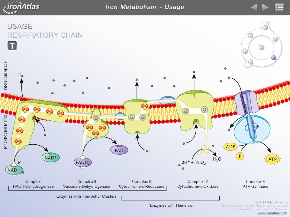 Iron Metabolism - Usage