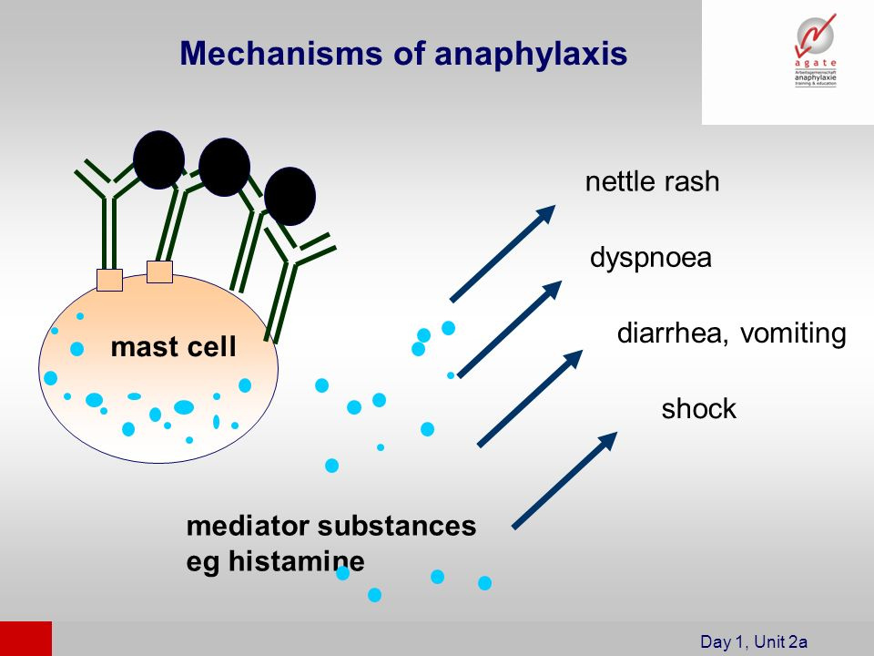 Mechanisms of anaphylaxis