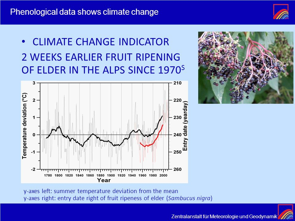 CLIMATE CHANGE INDICATOR 2 WEEKS EARLIER FRUIT RIPENING