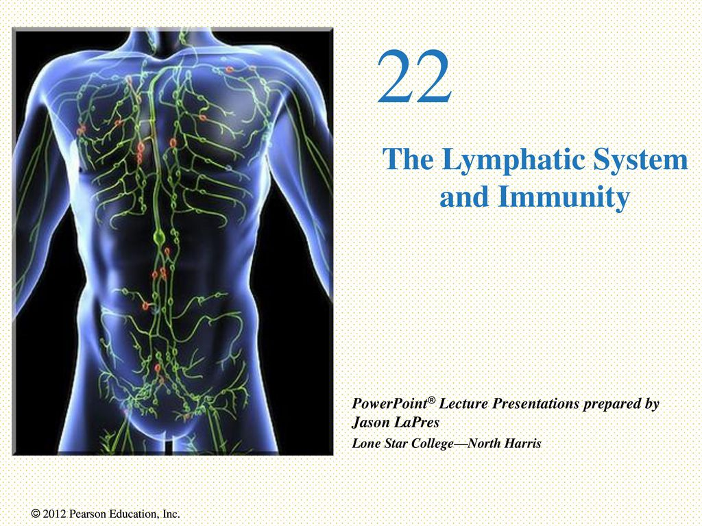 Magnificent Lymphatic System And Immunity Model - Human Anatomy ...