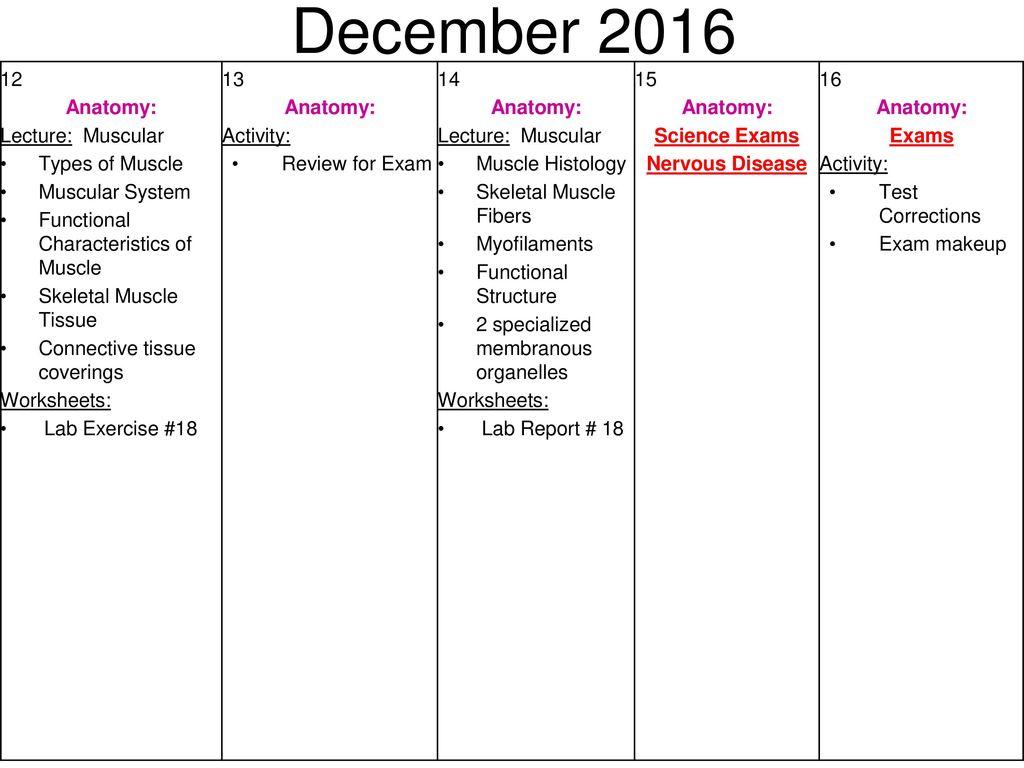 Lab Unit Worksheet 3 Tissues - Kidz Activities