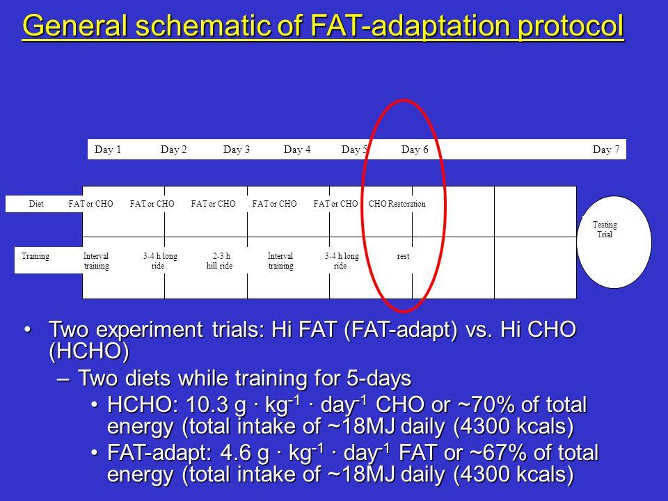 General schematic of FAT-adaptation protocol