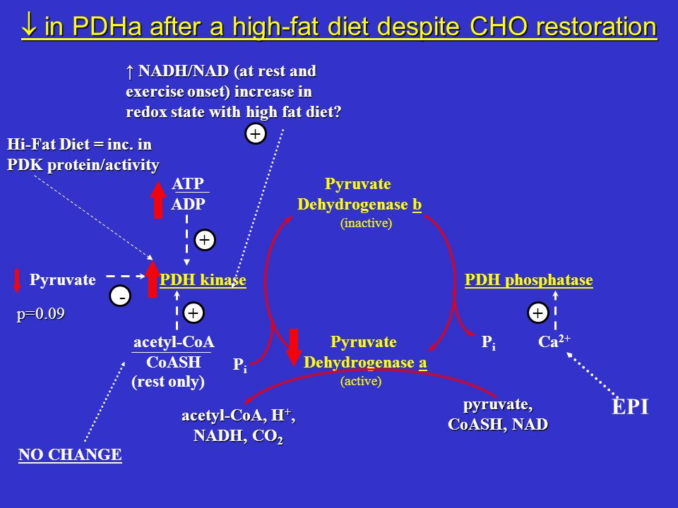  in PDHa after a high-fat diet despite CHO restoration