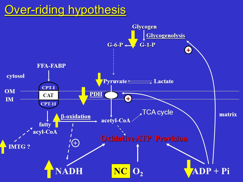 Over-riding hypothesis