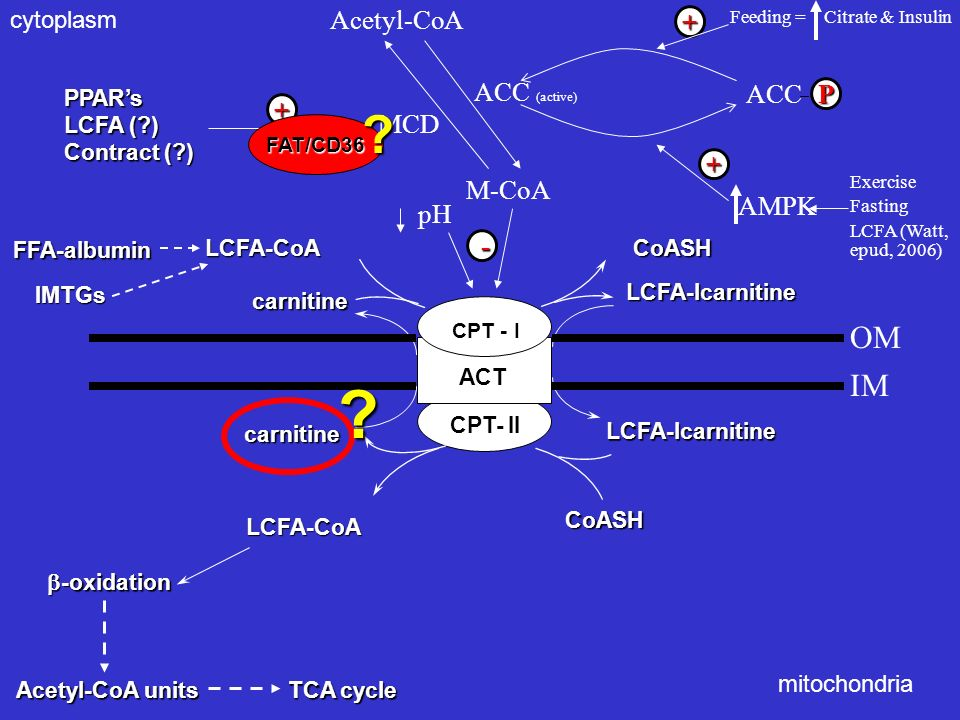 OM IM Acetyl-CoA ACC (active) MCD ACC P + + + AMPK M-CoA - pH