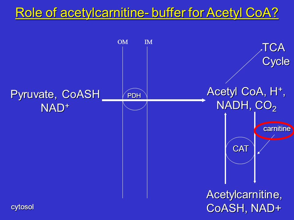 Role of acetylcarnitine- buffer for Acetyl CoA