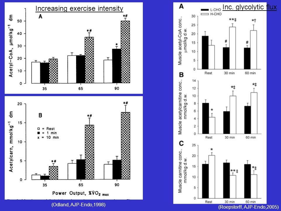 Increasing exercise intensity Inc. glycolytic flux
