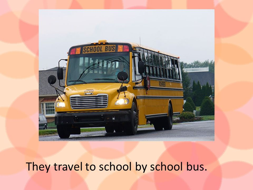 They travel to school by school bus.