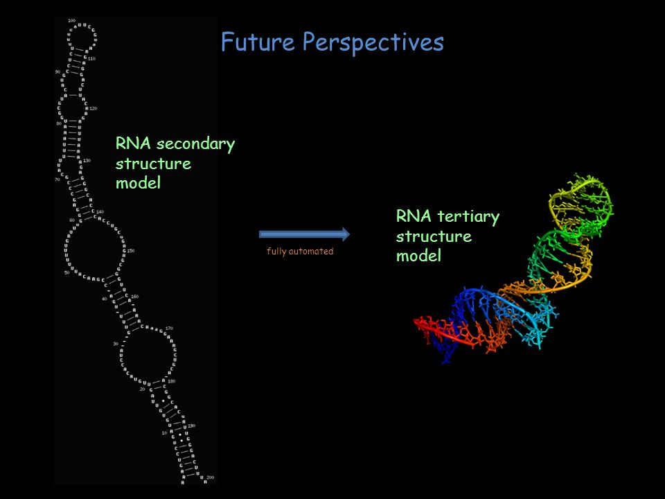 Future Perspectives RNA secondary structure model