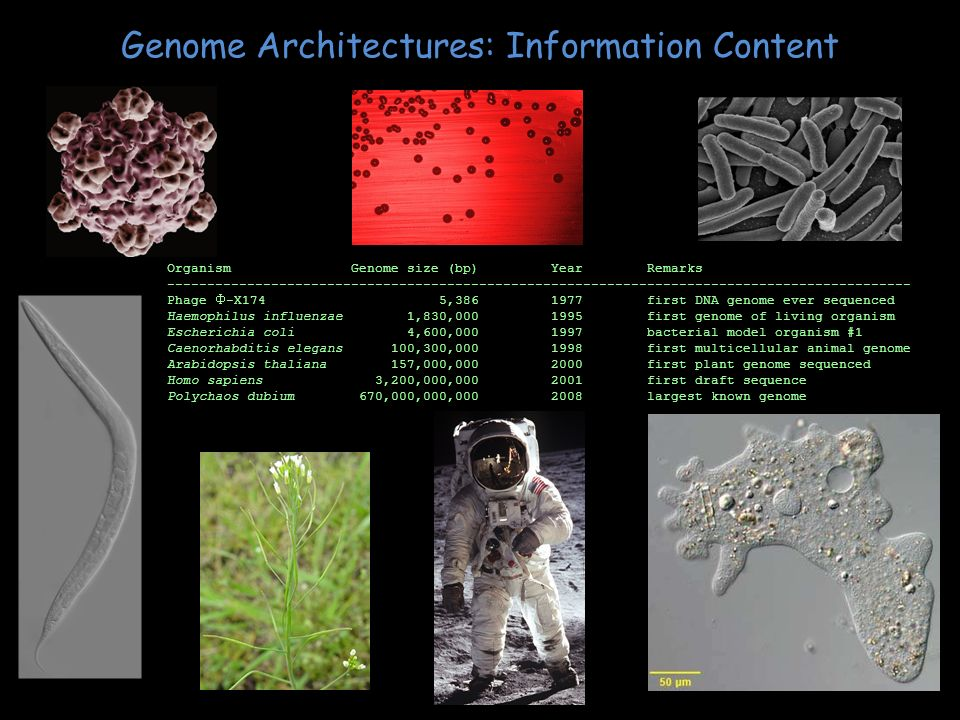 Genome Architectures: Information Content