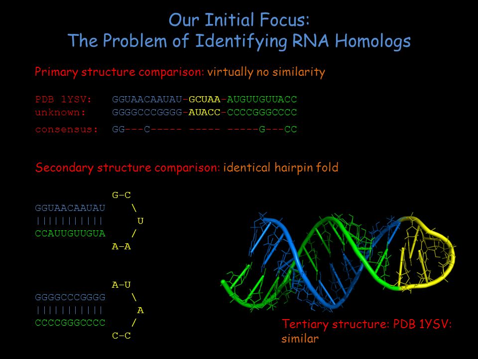 Our Initial Focus: The Problem of Identifying RNA Homologs
