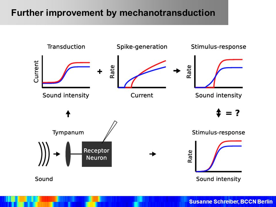 Further improvement by mechanotransduction