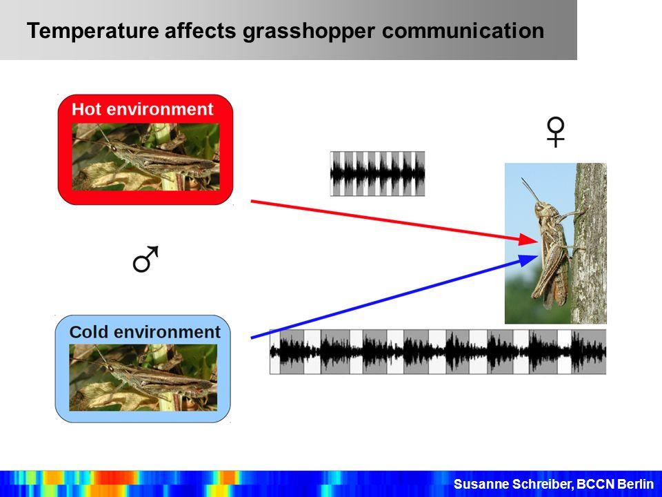 Temperature affects grasshopper communication
