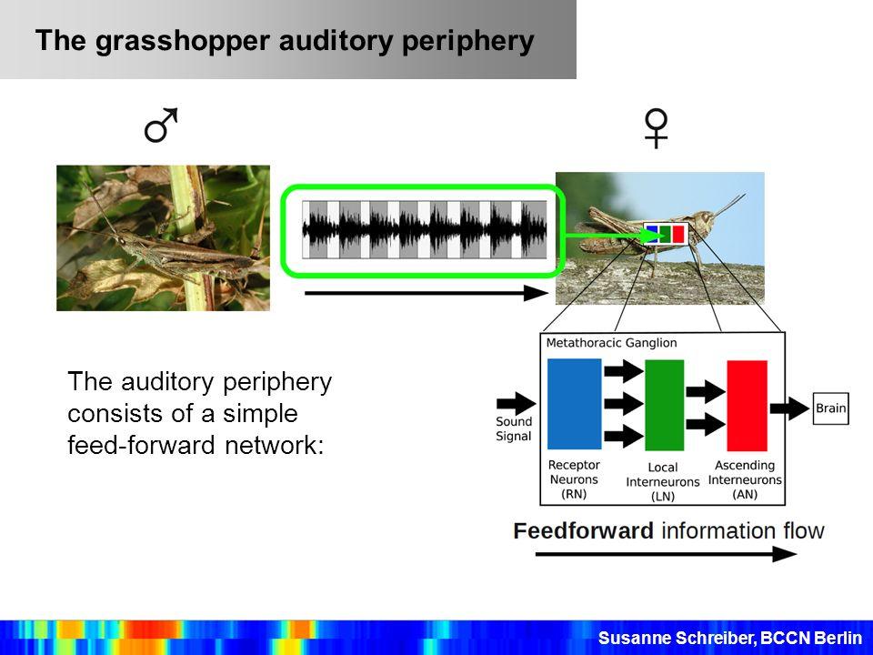 The grasshopper auditory periphery