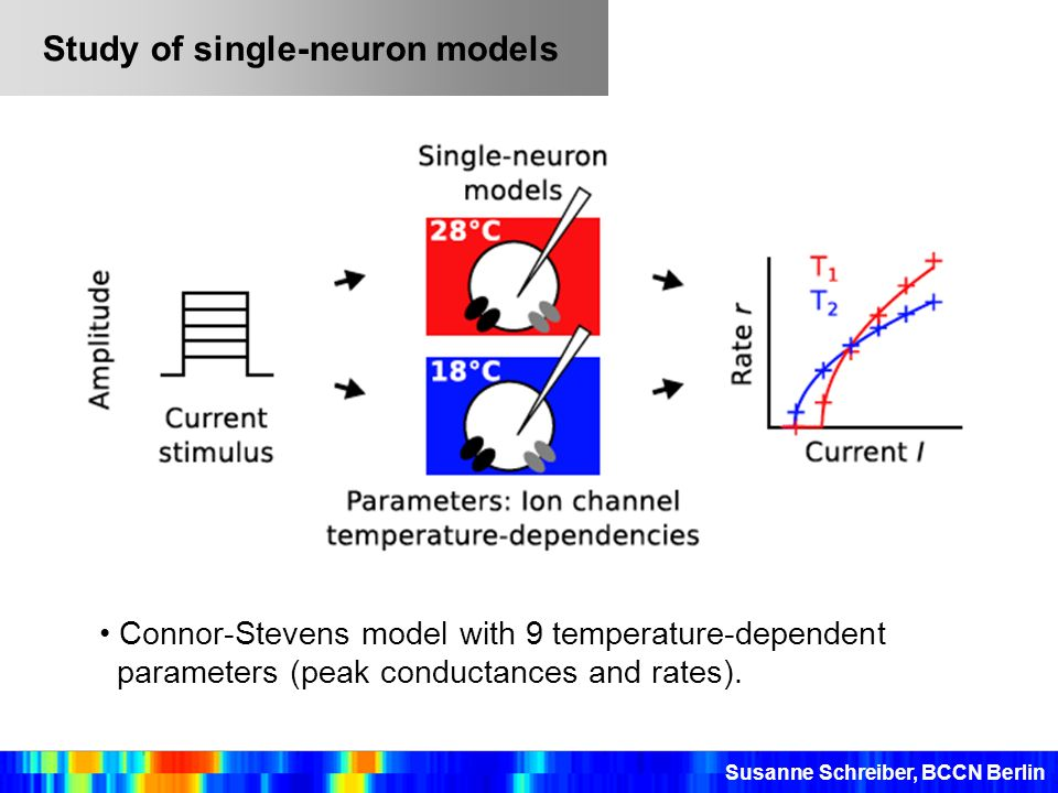 Study of single-neuron models
