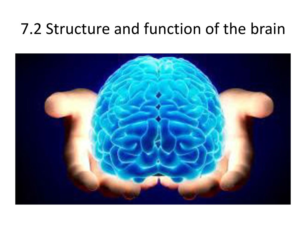 7.2 Structure and function of the brain
